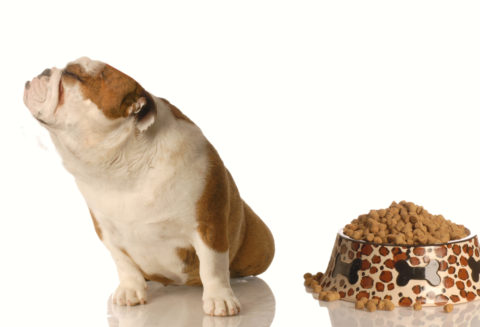 Pet Food Safety a Priority