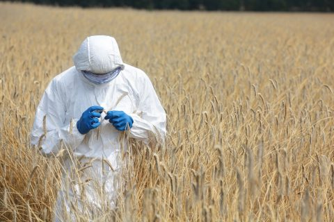 Genetically Modified Crop Safety: Finding a Needle in a Haystack