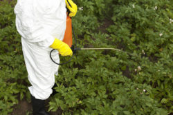 What Food Producers and Exporters Need to Know about Pesticide Residue Limits