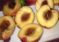 organic-produce-rotten