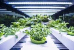 Sustainability and Food Safety: What's the Connection?