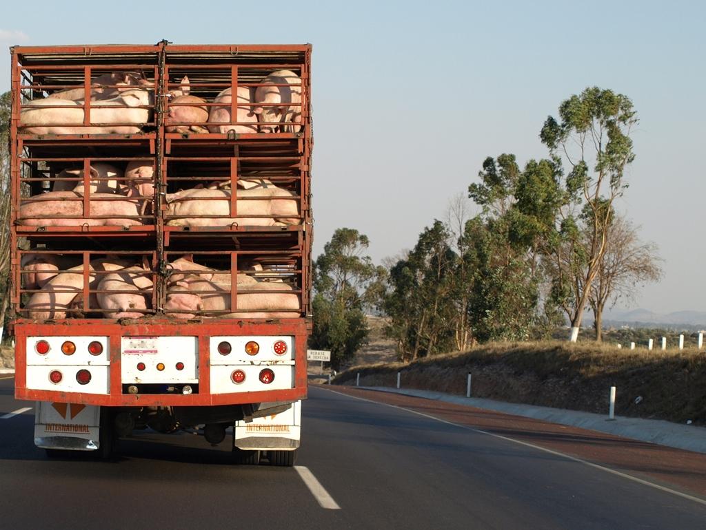 Food Truck Legal News