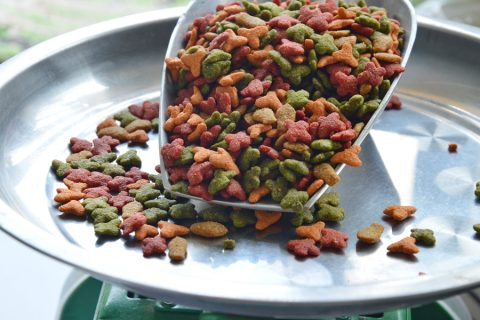 Pet Food Safety: Auditing to Meet the New Regulations